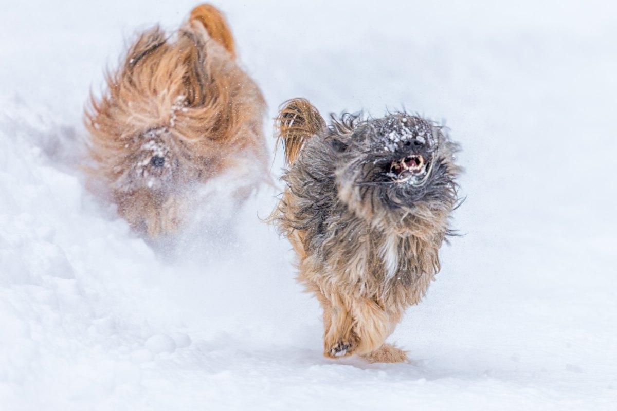 hund tassalva snö
