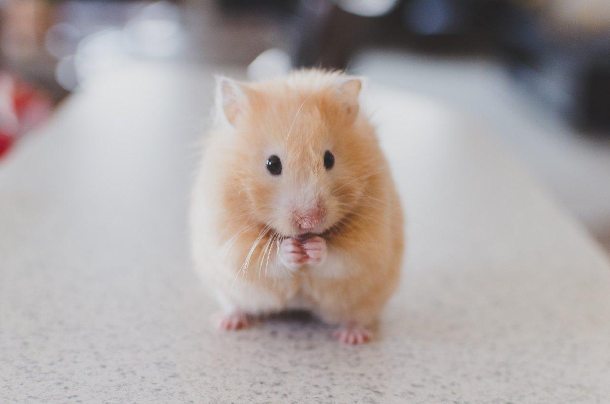 hamster GRÖNA MOMENT spola rätt