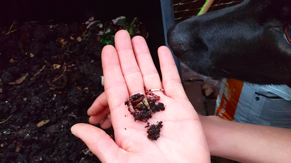 gronamoment.se kompostera Hållbar julkalender