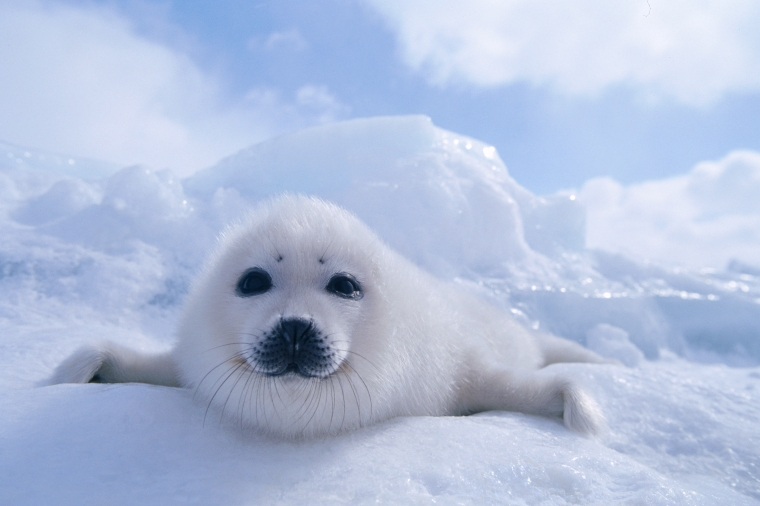 Wildest Arctic