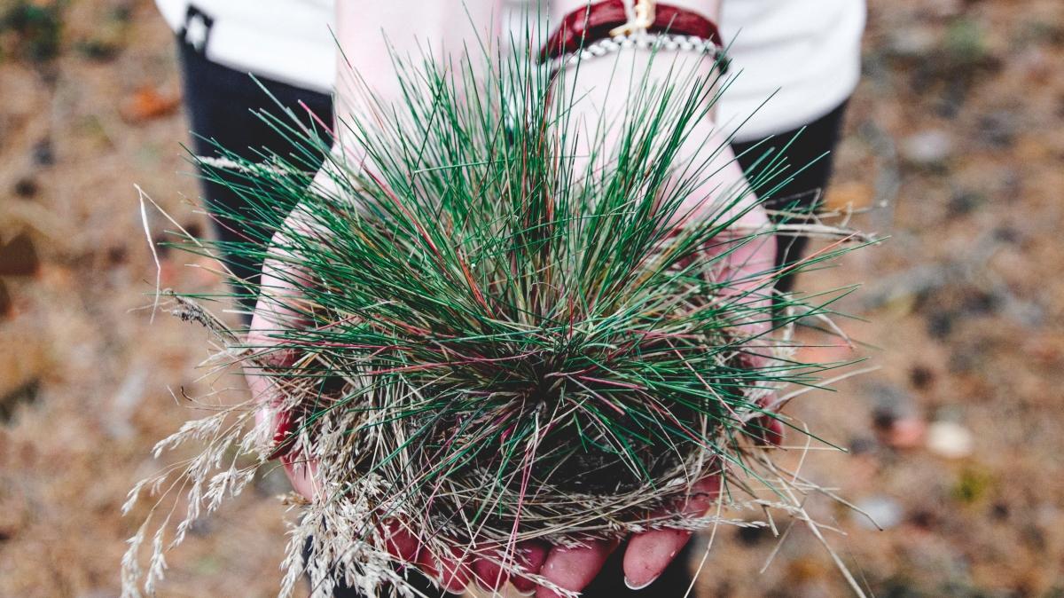 gronamoment.se gräsrötter