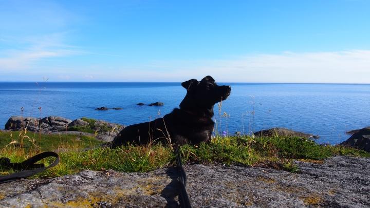 gronamoment.se Hunden Zita klimatsmart julkalender hemester
