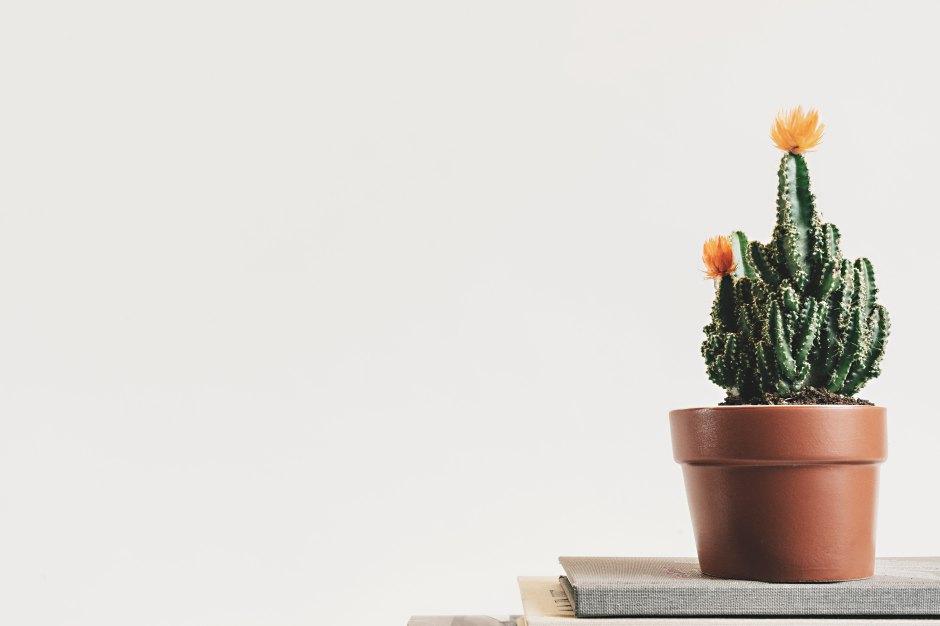 minimalism kaktus