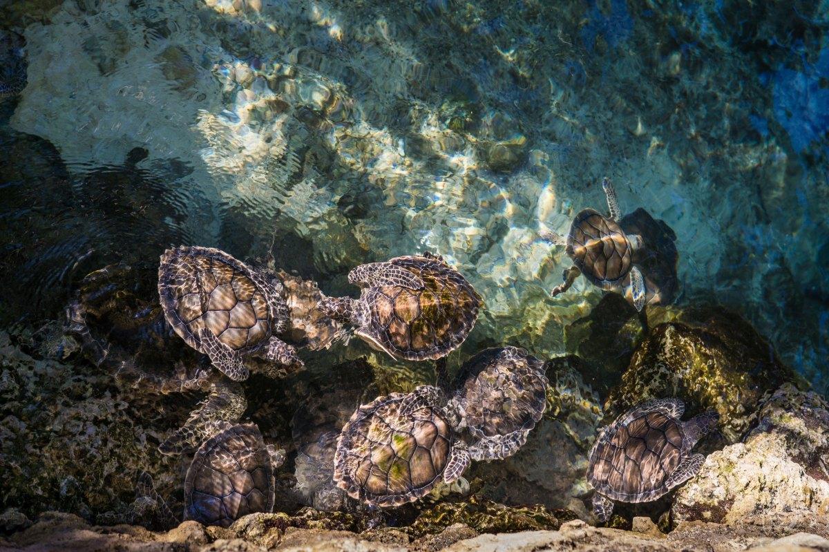 havssköldpaddor världsvattendagen