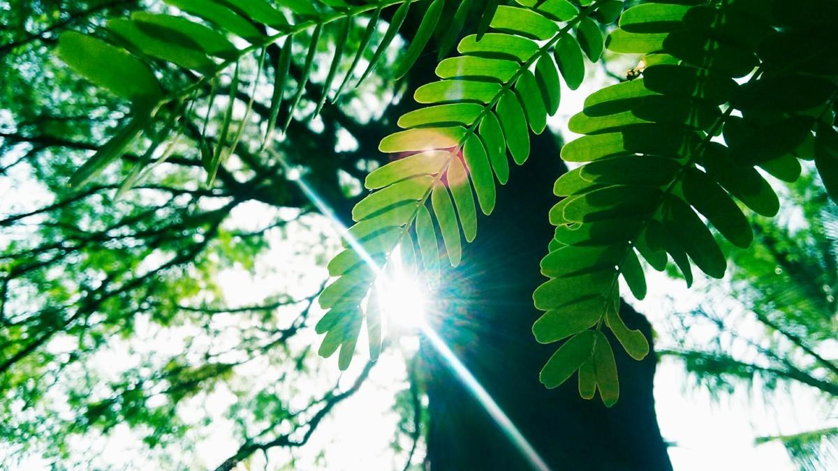 träd gröna moment löv
