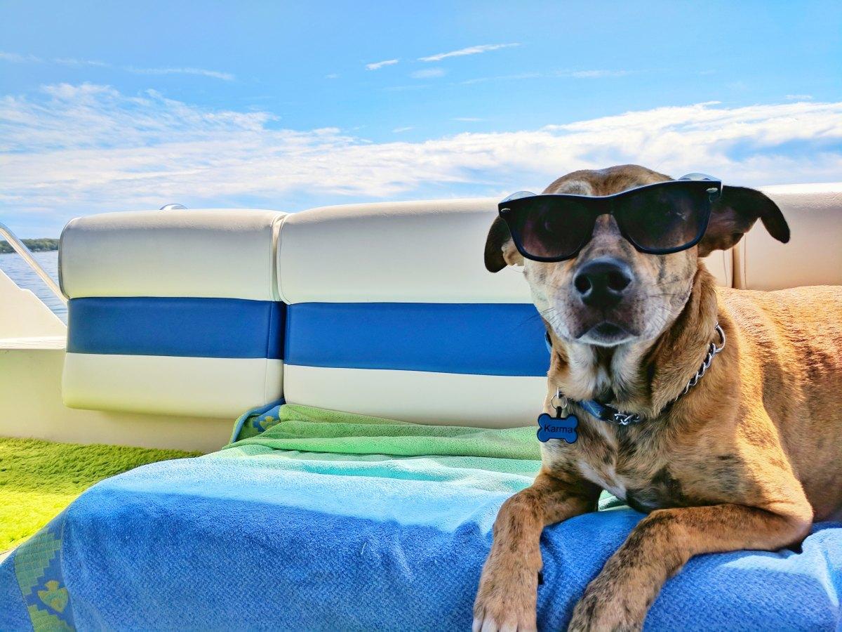 DIY Svalkande hundgodis på 3 sätt
