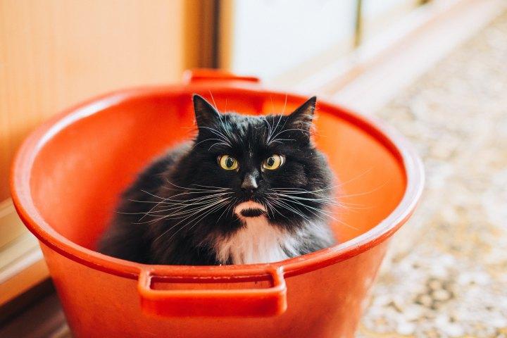 skelögd katt i hink If it fits I sits