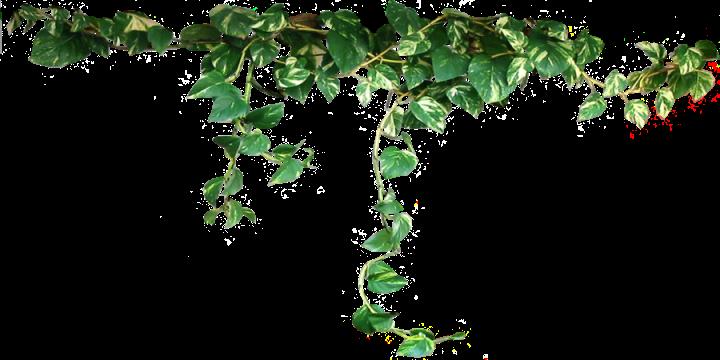 Rensa luft med plantor hållbar julkalender